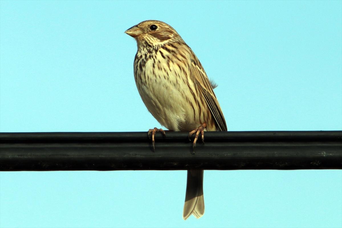 Ağrı Dağı'nın eteklerindeki milli park göçmen kuşların dönüşüyle renklendi