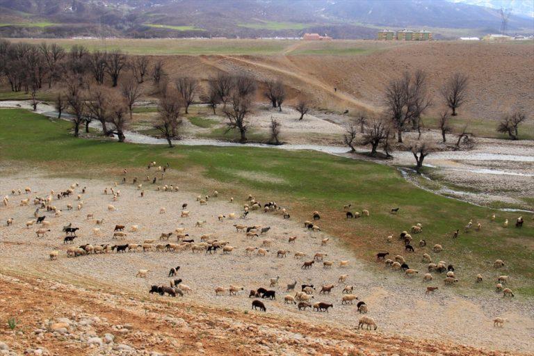 Munzur Dağları arasındaki Ovacık'ta meralar sürülerle şenlendi
