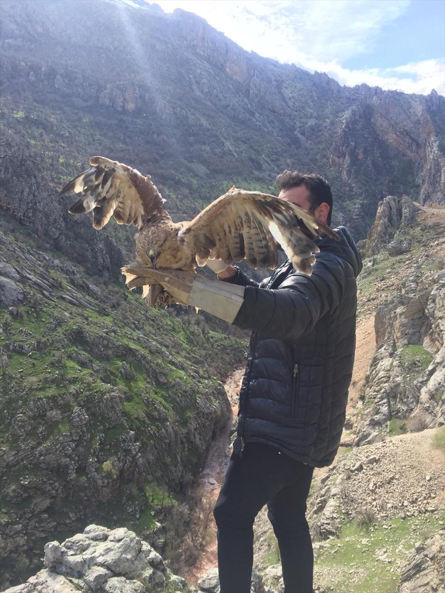 Şırnak'ta tedavisi tamamlanan 3 kızıl şahin doğaya bırakıldı