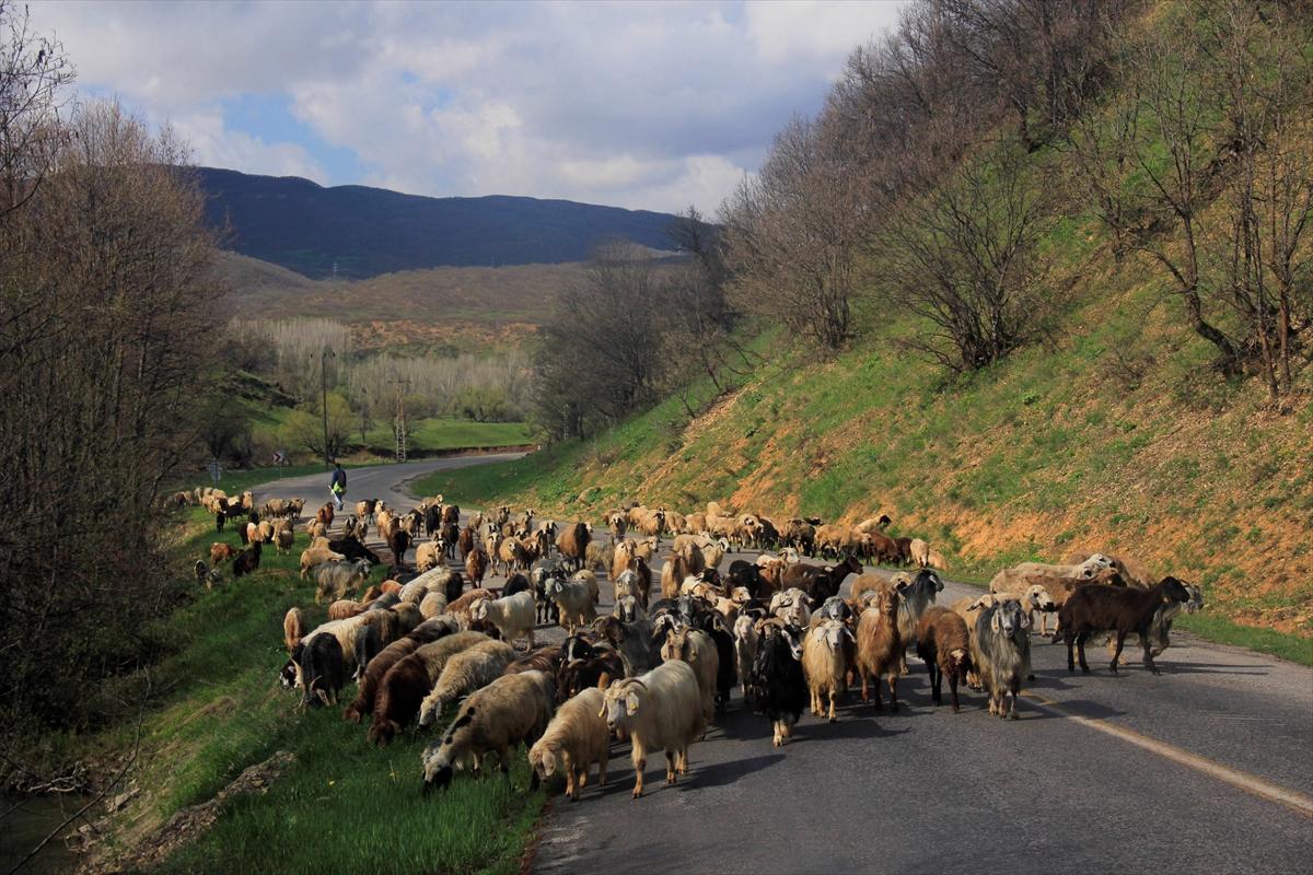 Besicilerin Mercan Dağları eteğindeki köylere zorlu yolculuğu