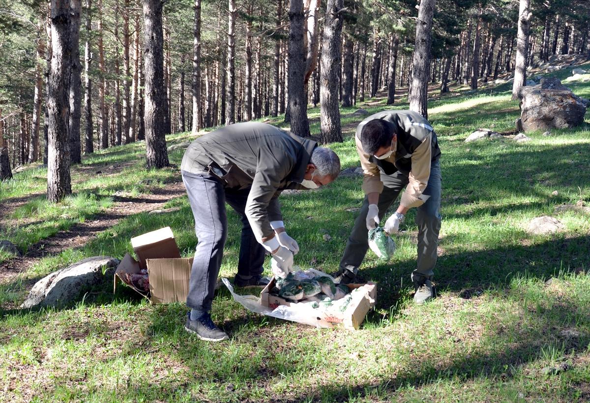 Kars'ta ayılar mahalleye inmesin diye ormana yiyecek bırakıldı