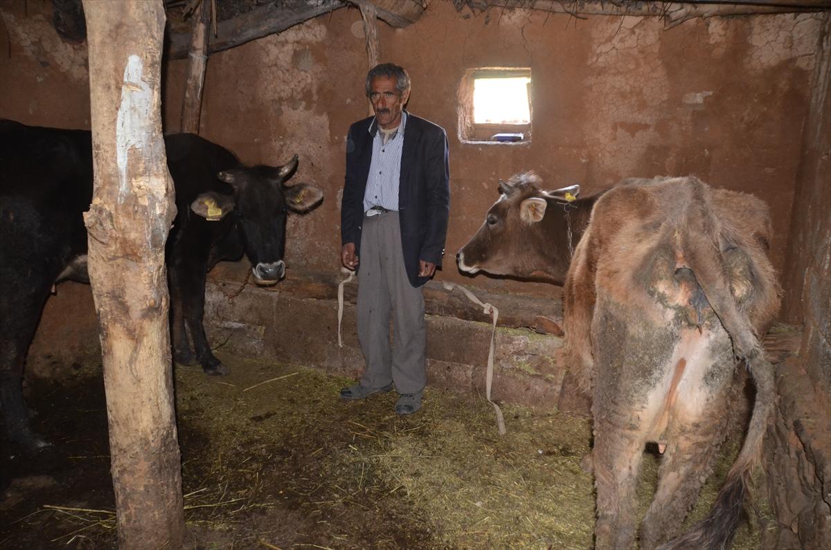 Tek geçim kaynağı bataklığa saplanan yaşlı adama 4 inek hediye edildi