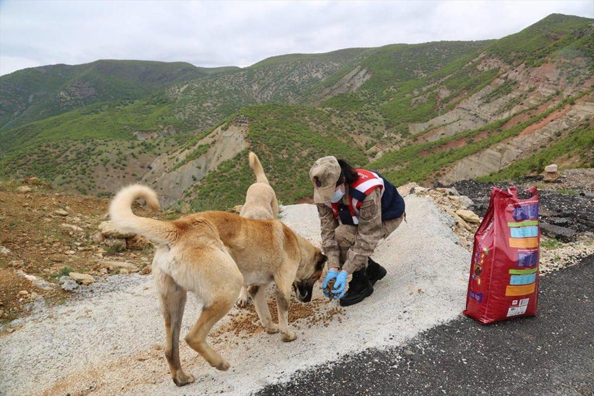"""Tunceli'nin """"Vefalı"""" yürekleri sokak hayvanlarını unutmadı"""