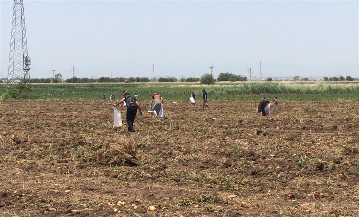 Adana'da patates tarlasında başakçılar arasında silahlı kavga: 4 yaralı