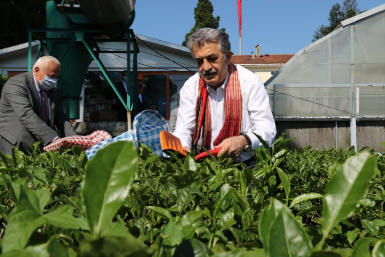 AK Parti Genel Başkan Yardımcısı Yazıcı çay fabrikasını ziyaret etti:
