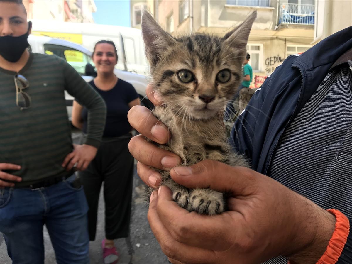 Edirne'de otomobilin motor kısmına sıkışan kedi için seferber oldular