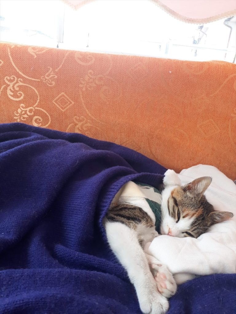 """Sivas'ta yürüyemeyen sokak kedisi """"Şanslı"""" tedavi edildi"""