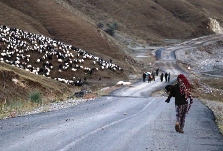 Ağrı'da köylerin zarar gördüğü selde 100'e yakın koyun telef oldu