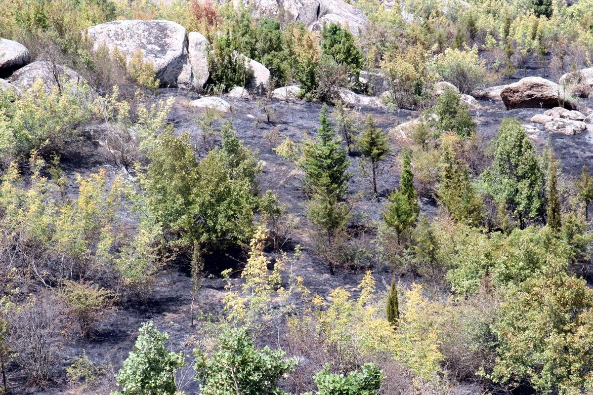 Kırklareli'nde orman yangını