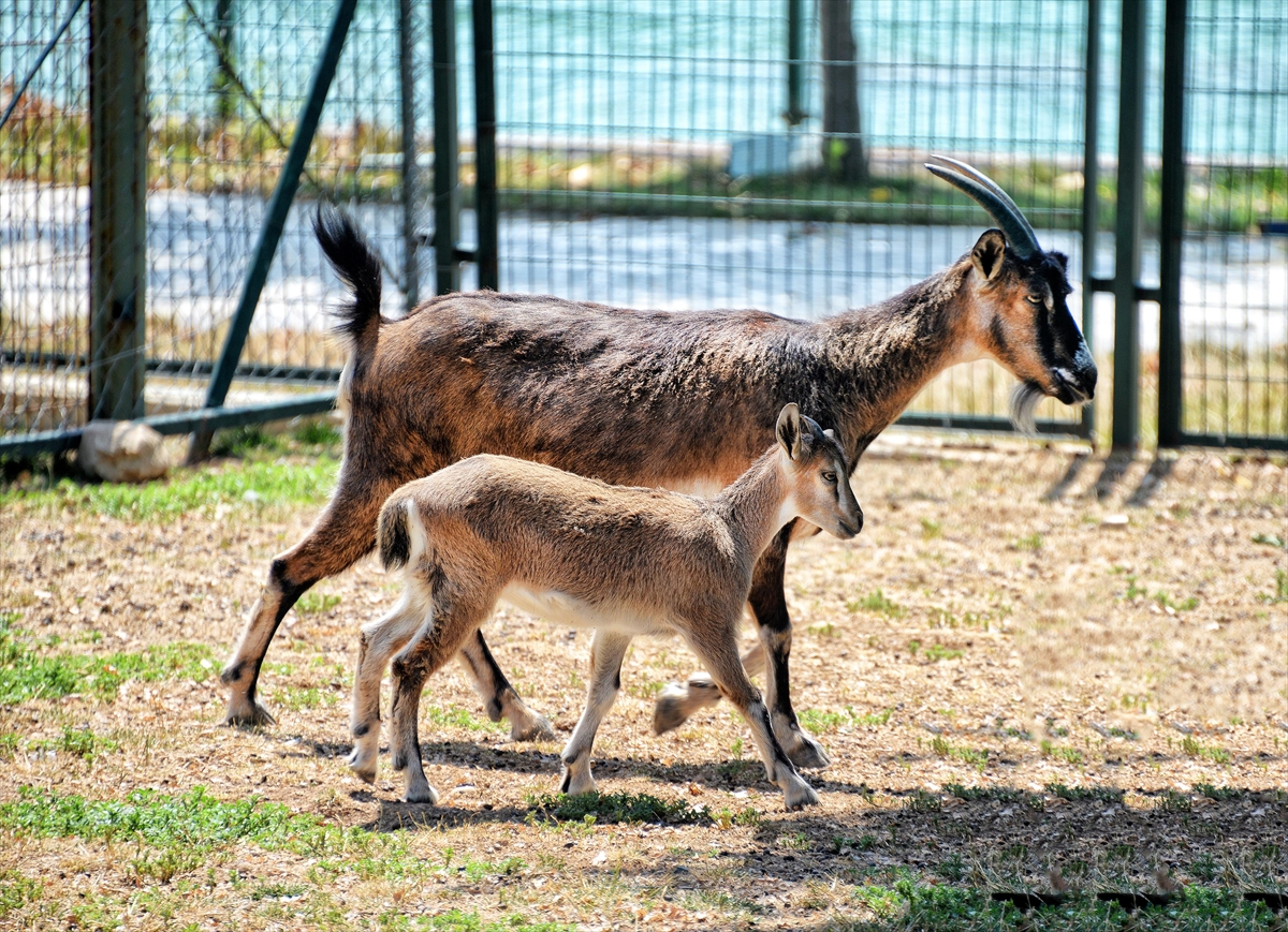 Malatya Hayvanat Bahçesi'nde doğan yavrular sevimlilikleriyle dikkati çekiyor