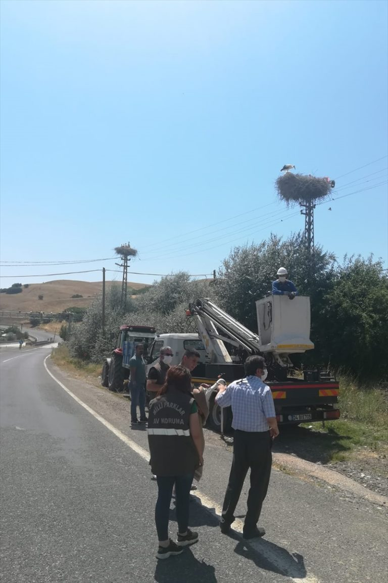 Tunceli'de Mehmetçik ve görevliler yuvasından düşen minik leylek için seferber oldu