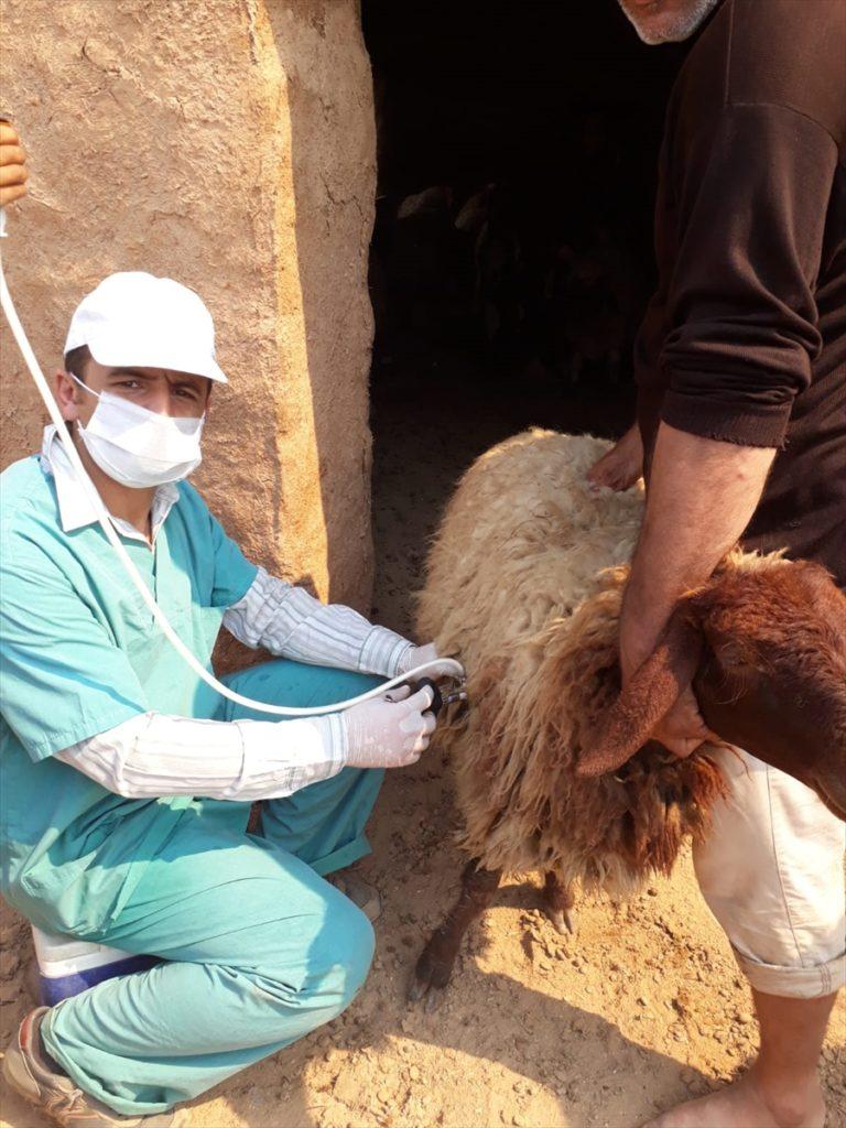 Barış Pınarı Harekatı bölgesinde binlerce hayvan aşılandı