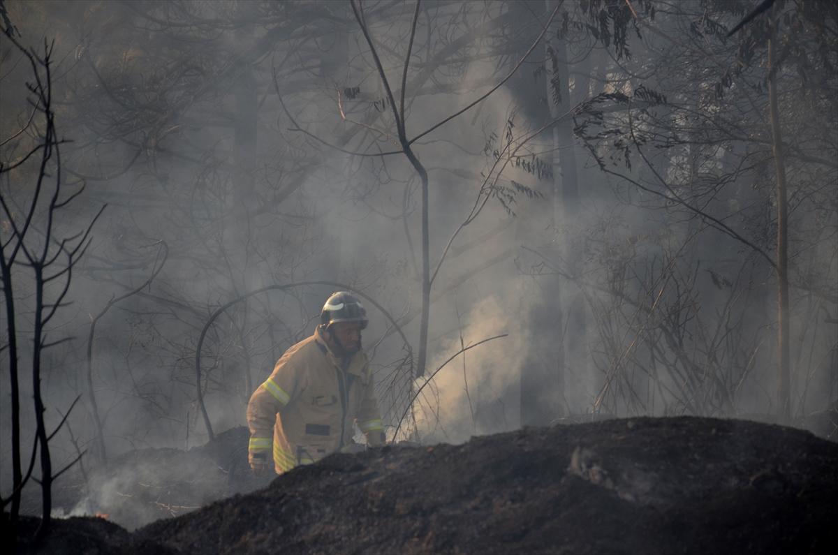 GÜNCELLEME 2 – Beykoz'da ormanlık alanda yangın
