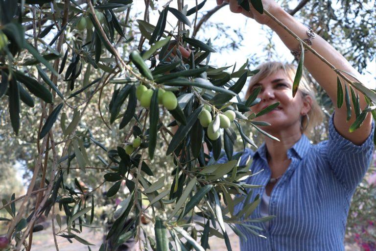 Kariyerini bırakıp yöneldiği zeytinyağı işinde uluslararası takdir görüyor