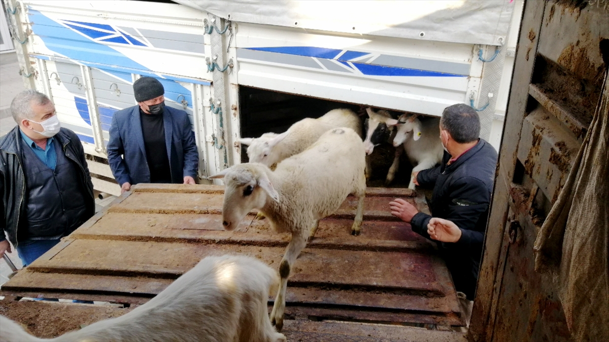 Bursa'dan, Kütahya'da yangında 70 koyunu telef olan üreticiye destek seferberliği
