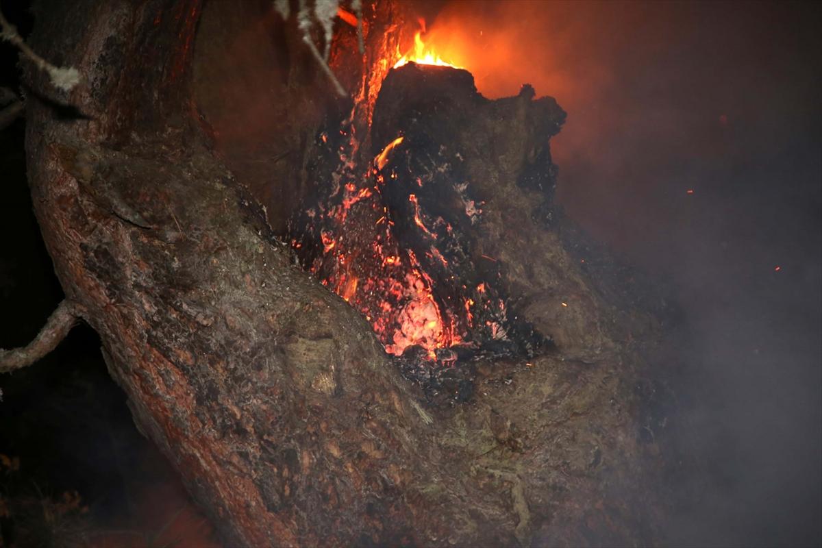 GÜNCELLEME – Kastamonu'da orman yangını
