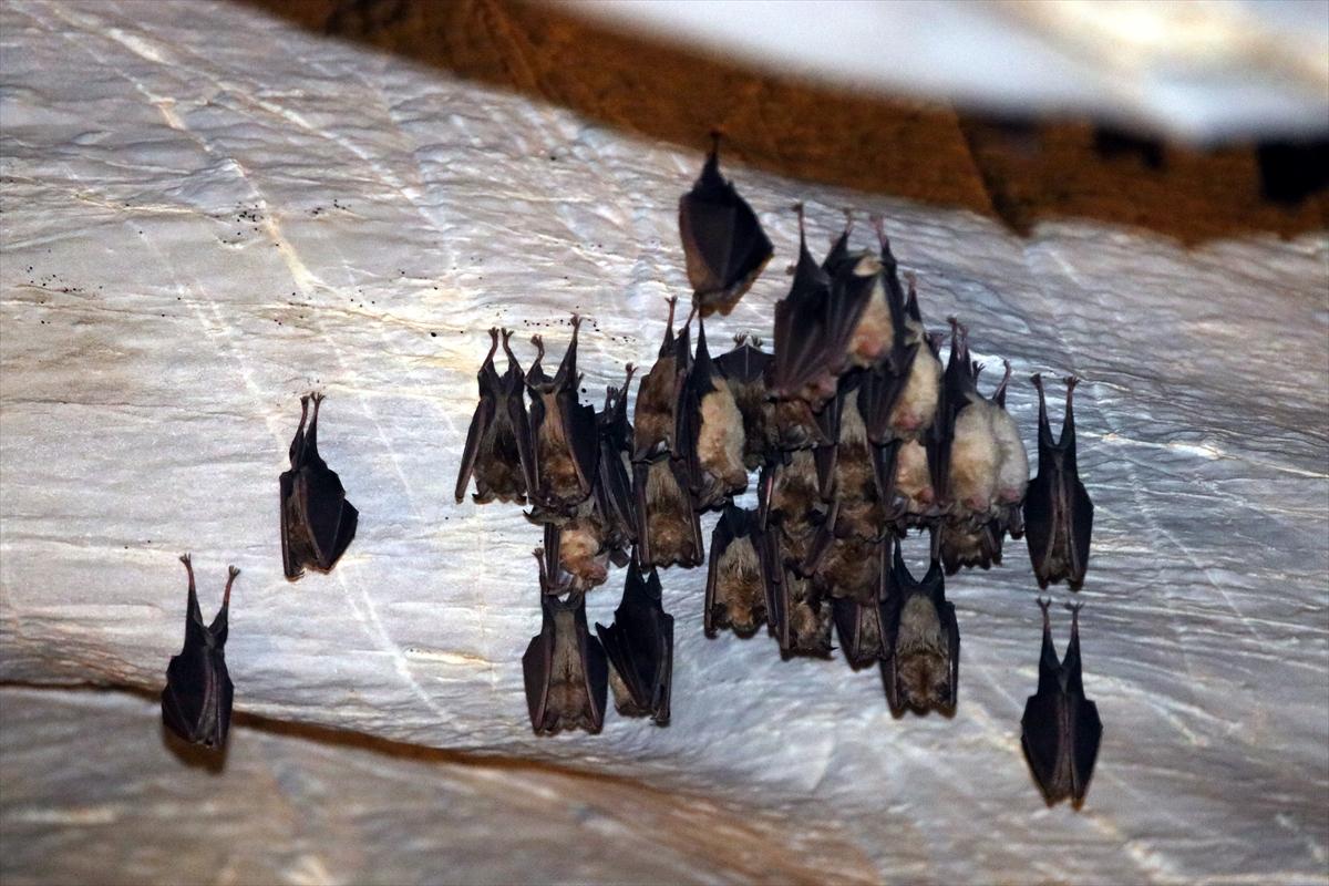 """Kırklareli Valisi Bilgin: """"Dupnisa Mağarası'nda yarasalar da düşünülerek yatırımlar yapılıyor"""""""