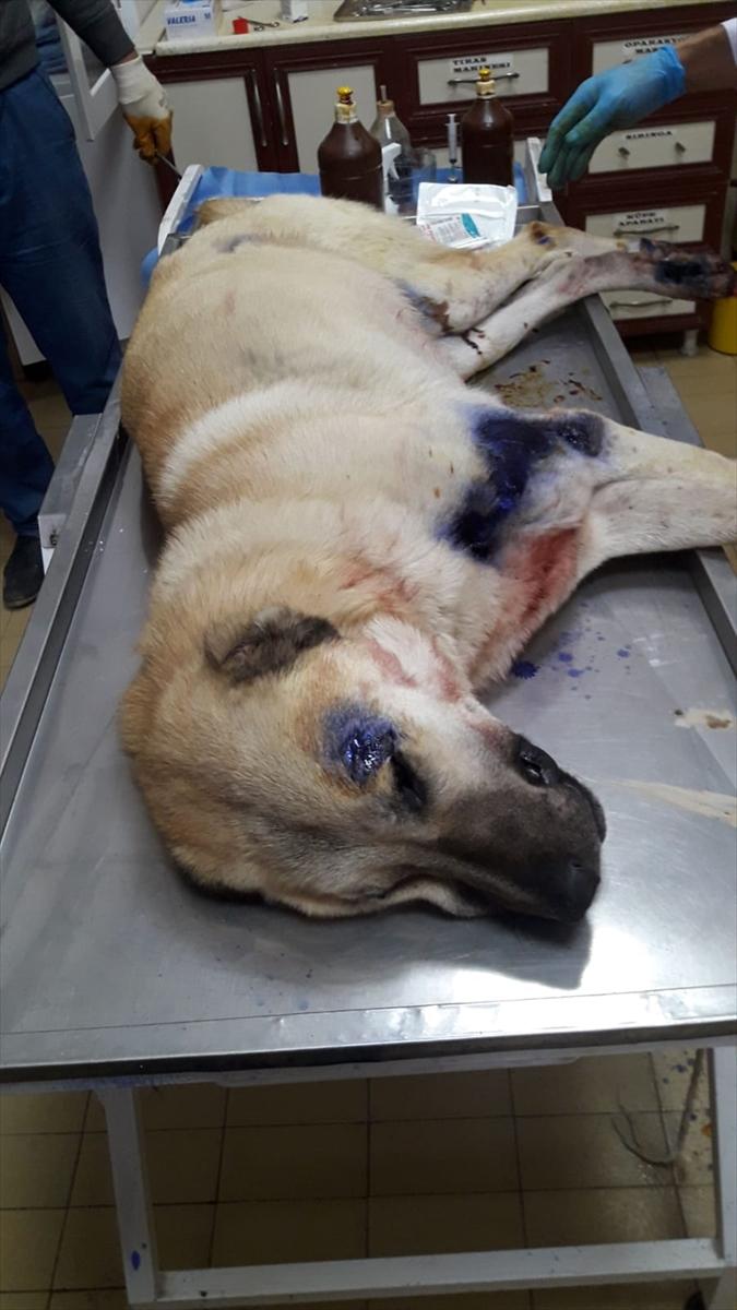 Iğdır'da köpeğe kötü muamele ettiği iddia edilen kişi gözaltına alındı