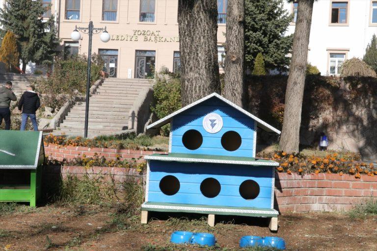 Yozgat Belediyesi sokak kediler için 20 barınak yaptırdı